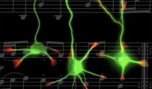 musiccognition-451x266